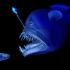 bioluminbescence