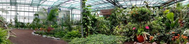 Les Jardins des Papillons s'ouvrent aux abeilles et aux fourmis ! - Coze Magazine - L' Agenda ...