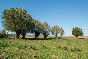 Remarq-arbres ! L'exposition des arbres remarquables du Bas-Rhin