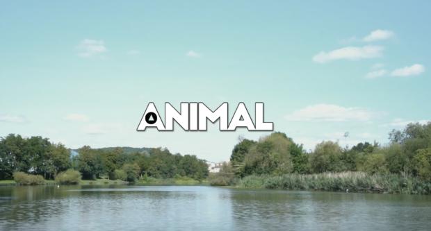 Clip : Les Garçons Trottoirs - ANIMAL
