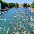 L'Open Swim Stars Harmonie Mutuelle, premier circuit de natation en eau libre en France, fête en 2018 sa 4e édition. Imaginé en 2012, cet événement fera étape cette année dans 7 villes : Èze, Paris, Lyon, Strasbourg, Madine, Douarnenez et Toulouse.