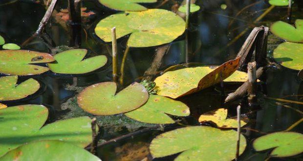 Voici une nouvelle occasion pour célébrer la nature, le plus vivant des patrimoines ! Et avec le CINE, on change de dimension : rendez-vous les 7, 8 et 9 septembre pour participer aux Journées Nature et Patrimoine.