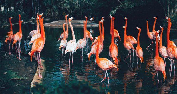 Cette année, le Parc Zoologique de Mulhouse fête ses 150 ans ! C'est avec de nombreux événements retraçant l'histoire du Parc et ses évolutions qu'a déjà été ponctuée la première partie de l'année. En septembre, ce n'est pas un mais bien trois rendez-vous qui attendent les visiteurs.