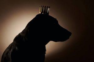 « Un chien, pour la plus grande joie d'une population qui n'en pouvait plus de la tyrannie exercée par ses précédents vice-rois qu'elle avait pris l'habitude de défenestrer, se retrouve à la tête d'une ville...
