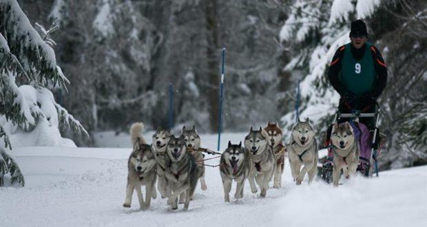 Comme chaque année, la station du Lac Blanc aura le plaisir d'accueillir plus de 70 attelages à l'occasion de ses courses de chiens de traîneaux, qui se tiendront les 26 et 27 janvier.