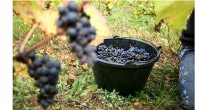 Rendez-vous incontournable des amateurs de vins, connaisseurs, amoureux ou simples curieux, le Salon des Vins des Vignerons Indépendants est de retour dans la capitale alsacienne et plus précisément au Parc des Expositions de Strasbourg, pour une 26e édition, qui se tiendra du 22 au 25 février.