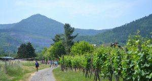La randonnée gourmande ottrottoise, le rendez-vous incontournable des amateurs de gastronomie et de beaux paysages est de retour pour une 17e édition le 9 juin.